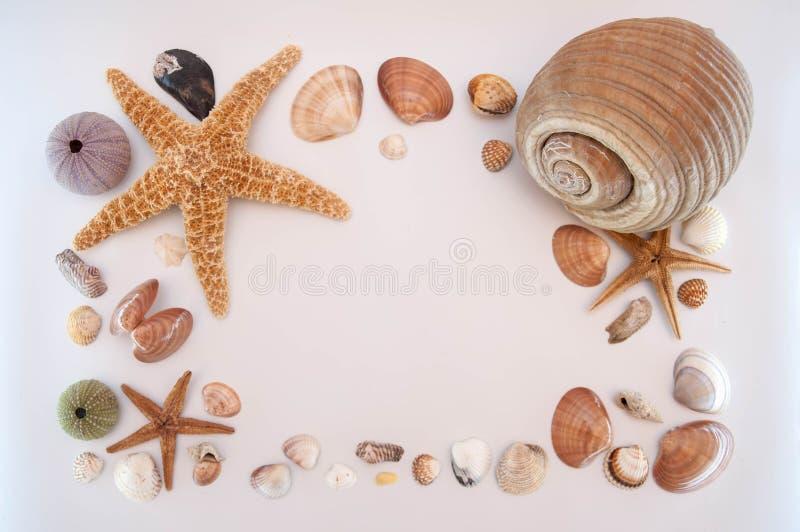 Escudos do mar no fundo cinzento fotografia de stock royalty free