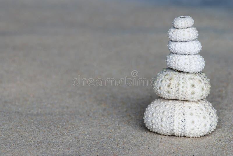 Escudos do ouriço-do-mar de mar fotografia de stock