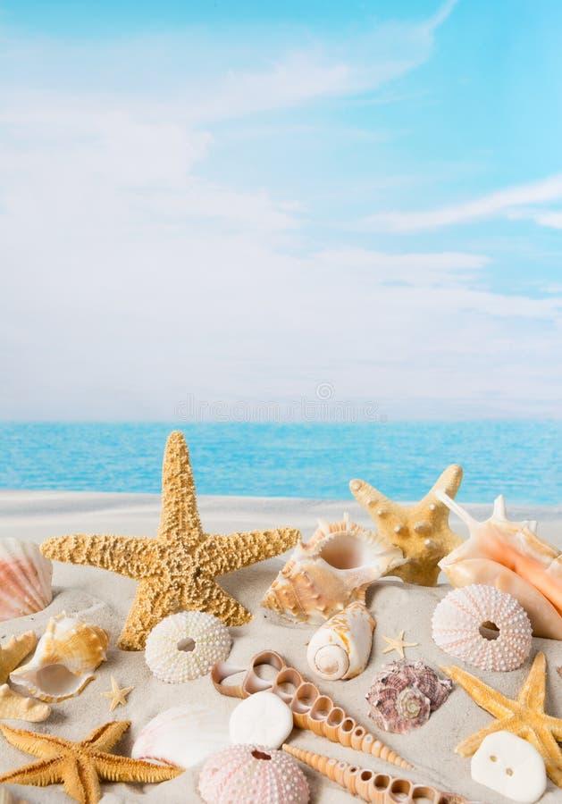 Escudos dos Starfish e do mar fotos de stock royalty free