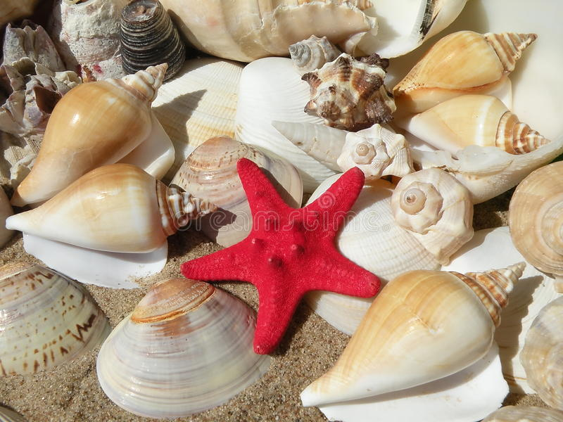 Escudos e estrela de mar imagens de stock