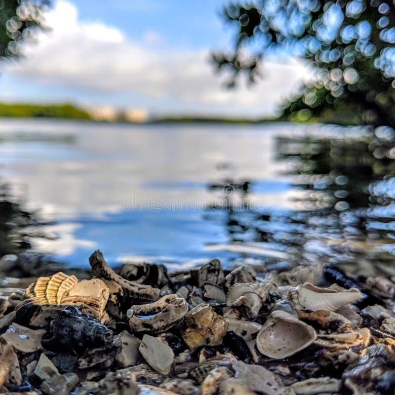 Escudos na costa pelo close-up da água fotografia de stock royalty free