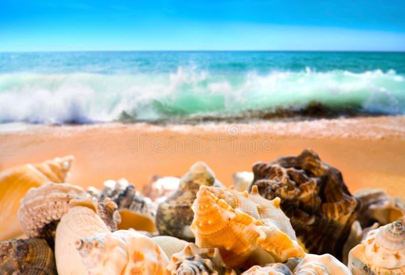 Escudos na praia foto de stock