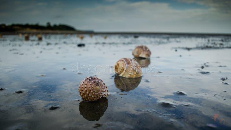 Escudos na praia imagens de stock