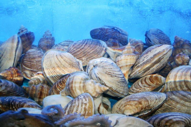 Escudos vivos do mar foto de stock