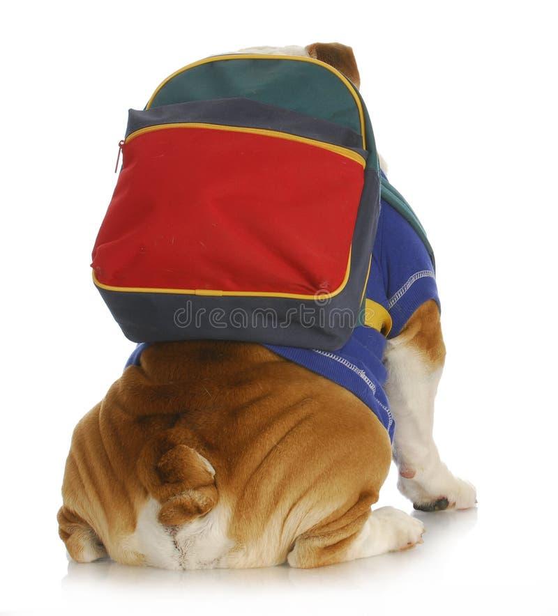 Escuela de la obediencia del perro foto de archivo