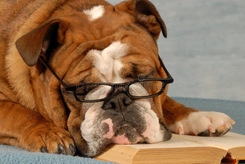 Escuela de la obediencia del perro imágenes de archivo libres de regalías