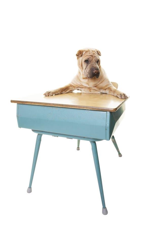 Escuela de la obediencia del perro foto de archivo libre de regalías