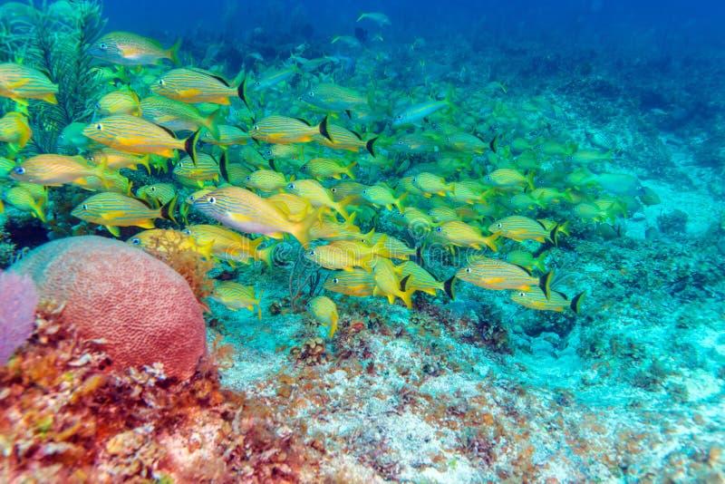 Escuela de pescados amarillos imagenes de archivo