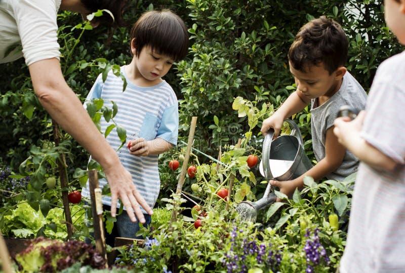 Escuela del profesor y de los niños que aprende cultivar un huerto de la ecología foto de archivo