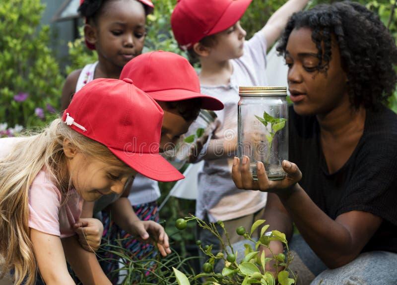 Escuela del profesor y de los niños que aprende cultivar un huerto de la ecología imágenes de archivo libres de regalías