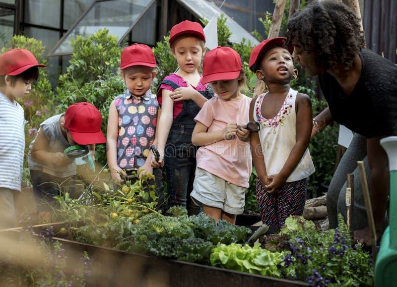 Escuela del profesor y de los niños que aprende cultivar un huerto de la ecología imagen de archivo