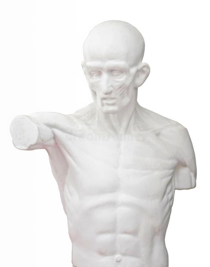 Download Escultura Para O Estudo Da Arte Foto de Stock - Imagem de peito, artista: 29827376