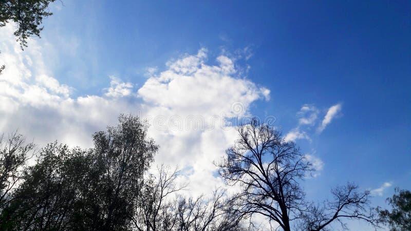 Escuro - c?u azul e nuvens e copas de ?rvore brancas pairosas claras imagem de stock