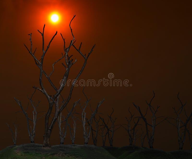 Escuro e queimado da árvore inoperante no céu crepuscular com fundo do por do sol fotos de stock royalty free