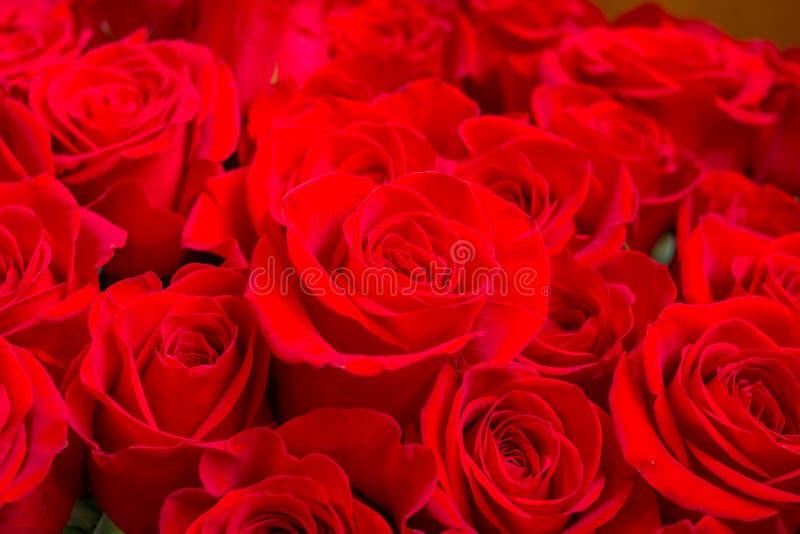 Escuro fresco - as rosas vermelhas fecham-se acima do fundo da textura Ramalhete das rosas Rosa Dia de Valentim vermelho, fundo d fotografia de stock