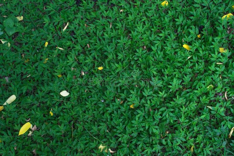 Escuro - fundo da grama verde foto de stock royalty free