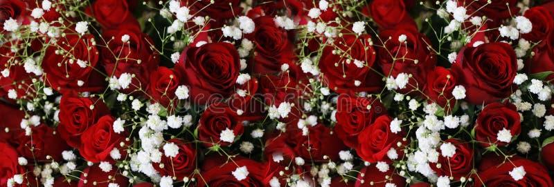 Escuro natural - Ruby Roses Background Wallpaper vermelho imagem de stock royalty free
