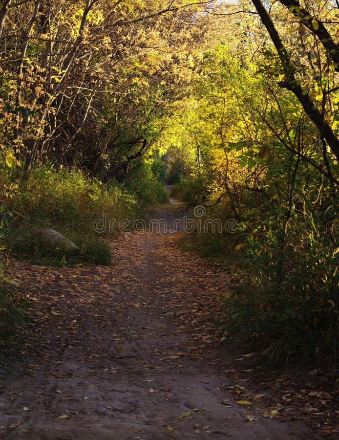 Escursione del percorso nella mattina fotografia stock