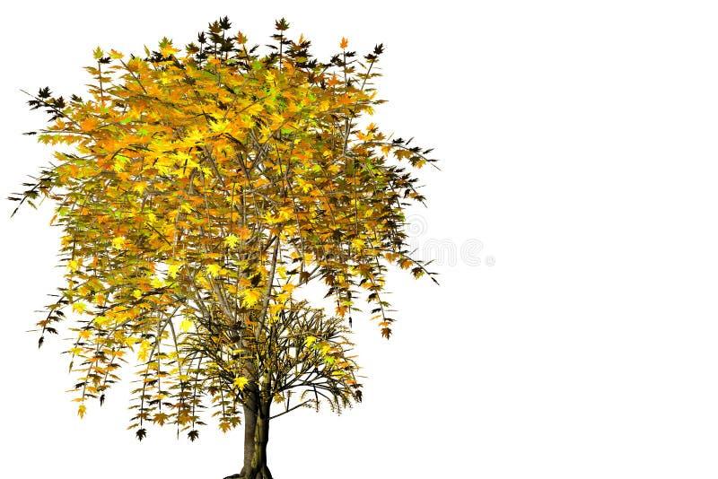 Esdoorn van de herfst isoleted op witte achtergrond. vector illustratie