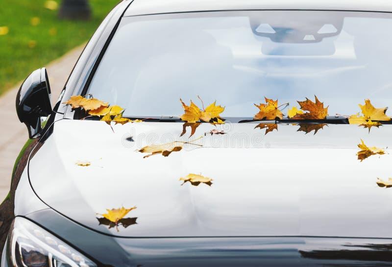 Esdoornbladeren op een nieuwe luxeauto bij de herfst royalty-vrije stock foto
