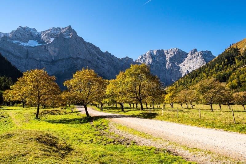 Esdoornbomen in Ahornboden, Karwendel-bergen, Tirol, Oostenrijk stock afbeelding