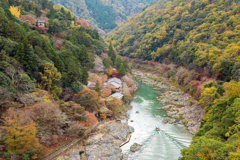 Esdoornboom in Arashiyama royalty-vrije stock foto