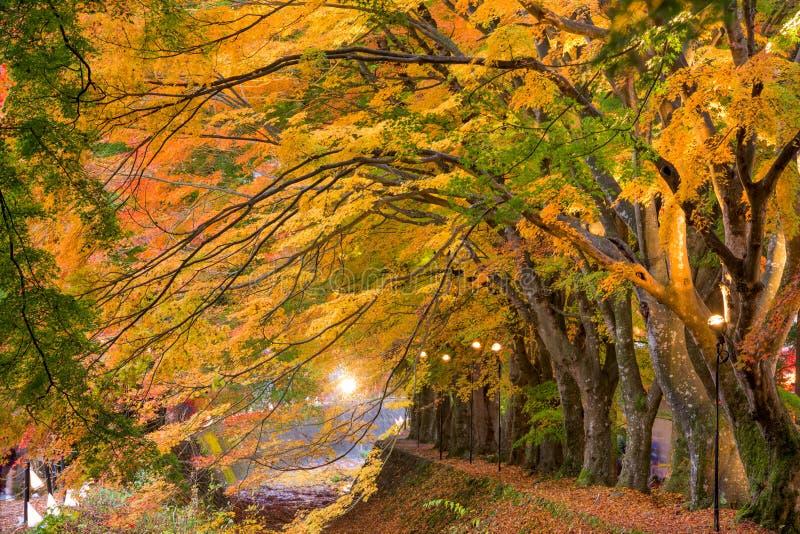 Esdoorngang van Japan royalty-vrije stock afbeelding