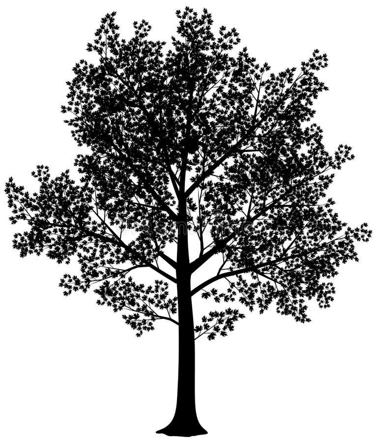 Esdoornsilhouet vector illustratie