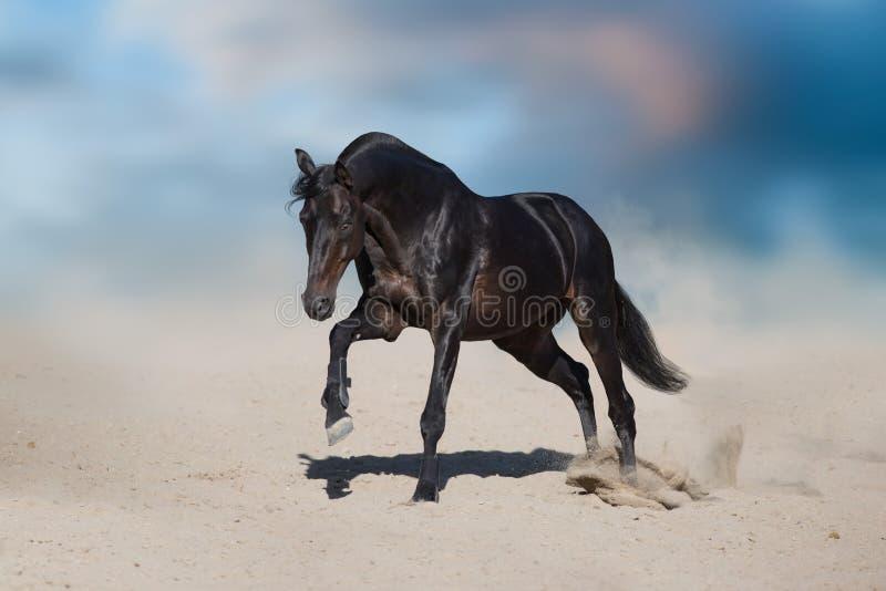Esecuzione nera del cavallo fotografia stock