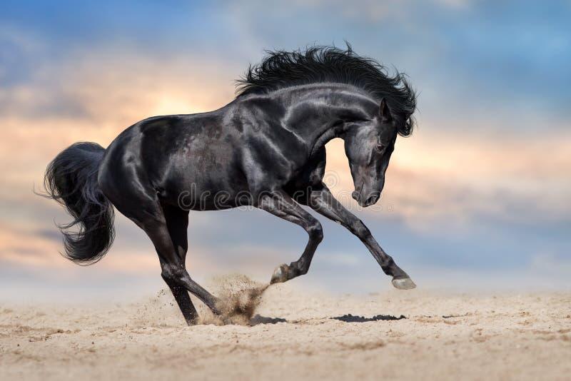 Esecuzione nera del cavallo immagini stock libere da diritti