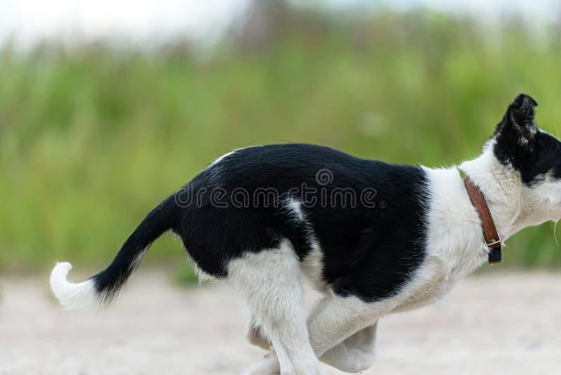 Eseguendo il giovane cucciolo del cane - zampe del primo piano fotografia stock libera da diritti