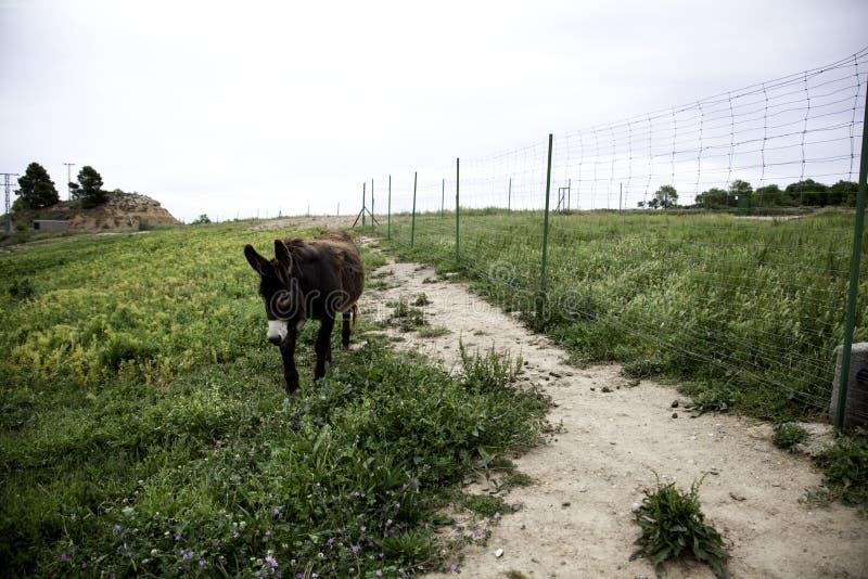Esel auf Bauernhof lizenzfreie stockbilder