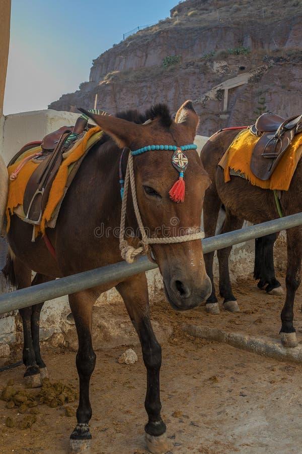 Esel auf den Schritten von Fira, Santorini, Griechenland stockbilder