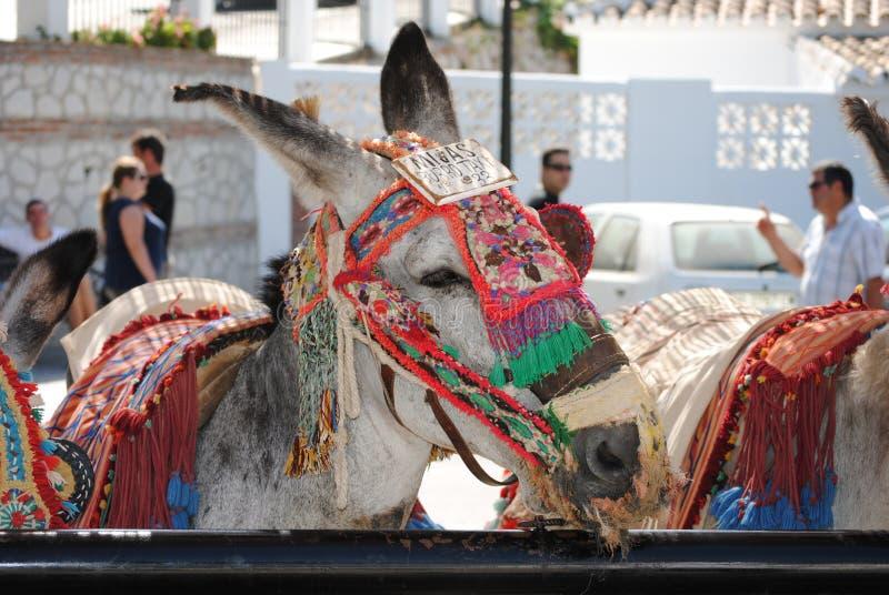 Esel in Mijas Andalusien, Spanien stockfoto