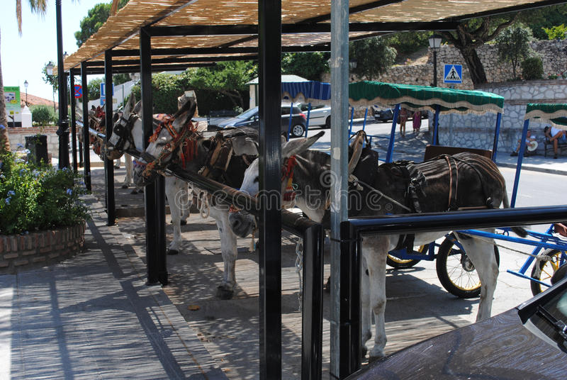 Esel in Mijas Andalusien, Spanien stockbild