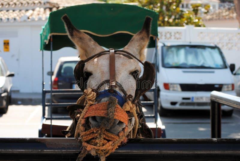 Esel in Mijas Andalusien, Spanien lizenzfreie stockfotos
