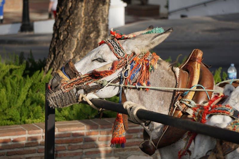 Esel in Mijas Andalusien, Spanien lizenzfreies stockbild