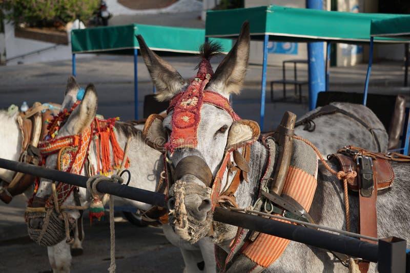 Esel in Mijas Andalusien, Spanien stockbilder