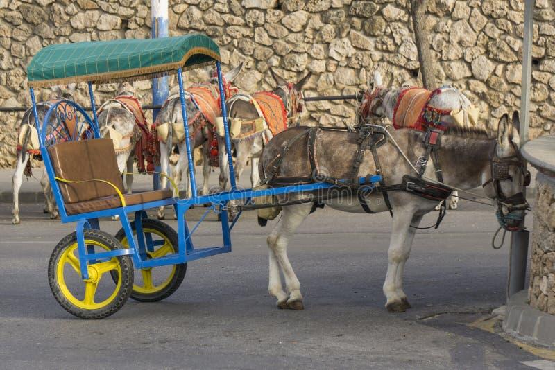 Esel in Mijas Andalusien, Spanien lizenzfreie stockbilder