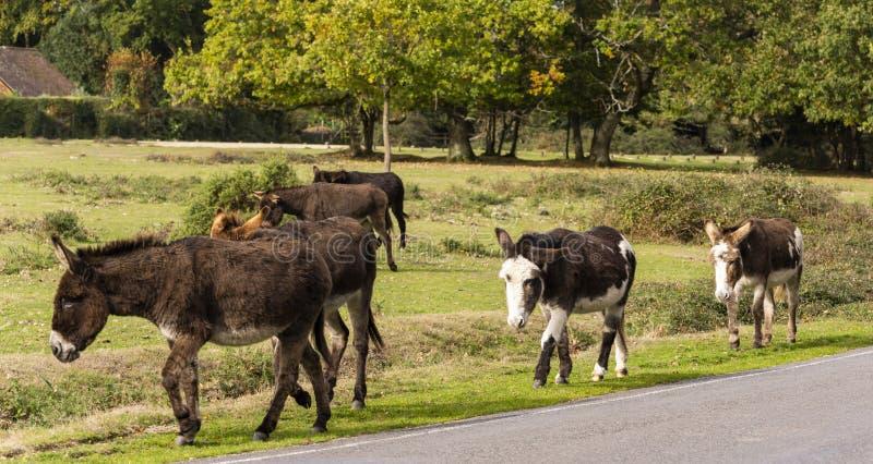 Esel-neuer Wald lizenzfreies stockfoto
