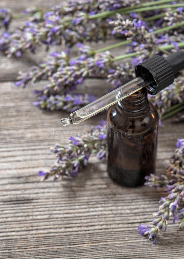 Esencia herbaria perfumada del aceite y flores dreied de la lavanda imagen de archivo libre de regalías