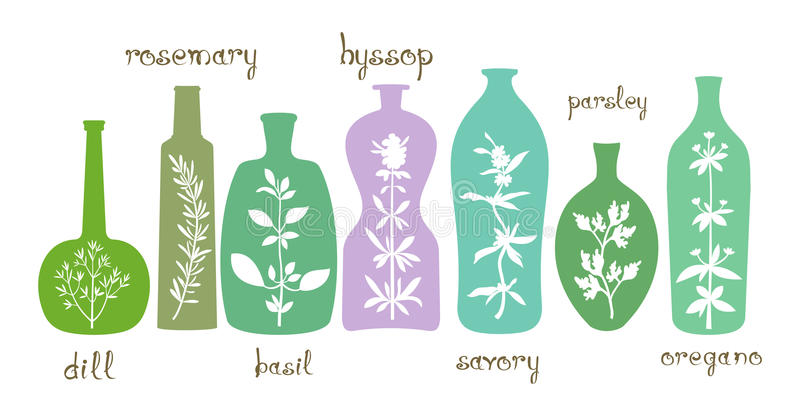 Esencial aromático de las hierbas stock de ilustración