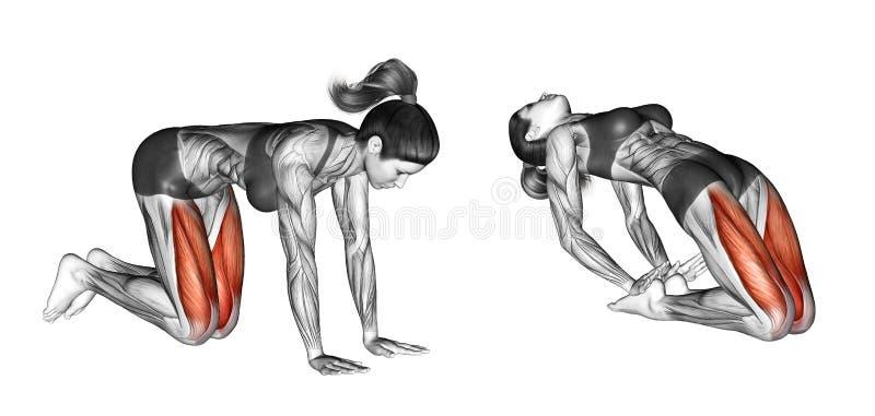 Esercitazione di forma fisica Esaminando soffitto femmina illustrazione di stock