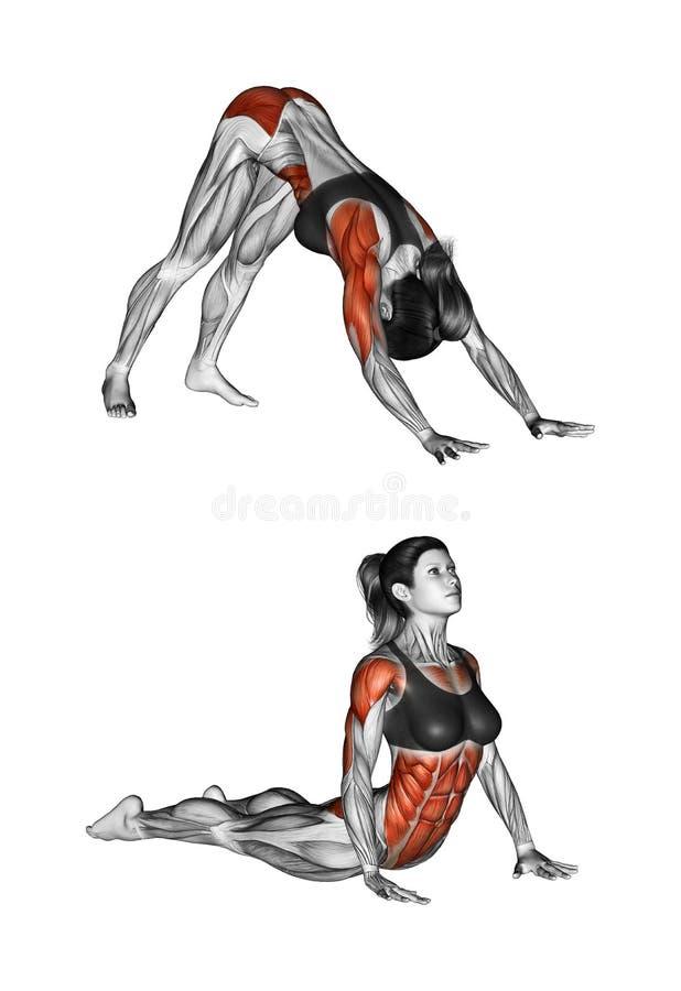 Esercitazione di forma fisica Indiano spinta-UPS femmina royalty illustrazione gratis