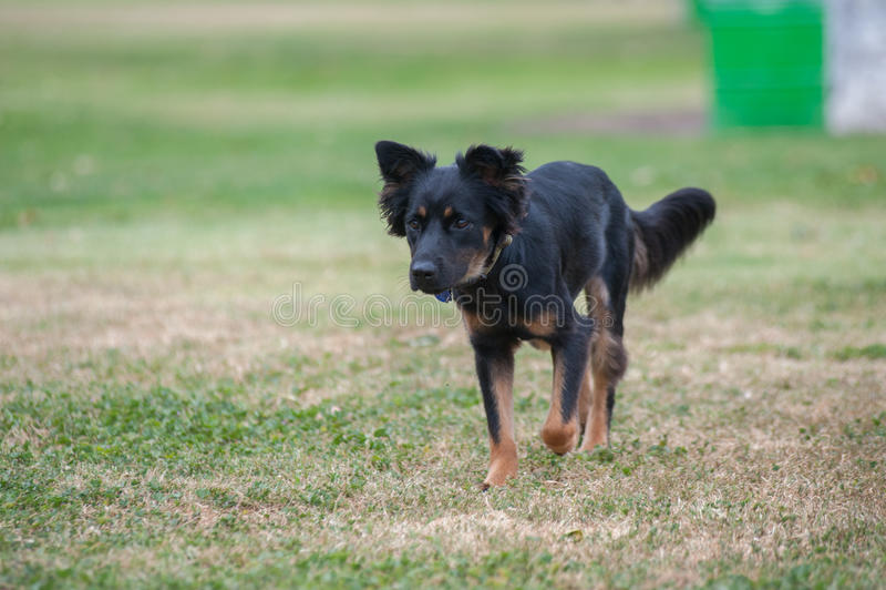 Esercizio misto del cucciolo della razza fotografia stock libera da diritti