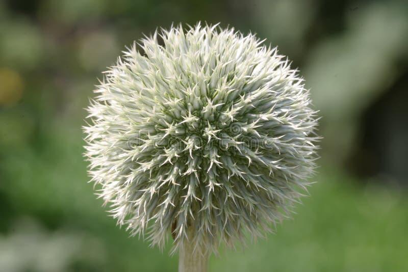 Esfera da flor