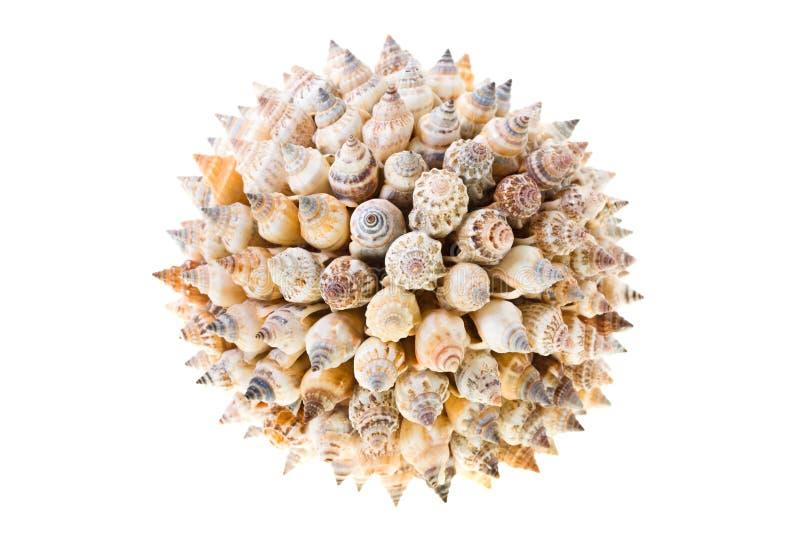 Esfera de conchas de berberecho fotografía de archivo