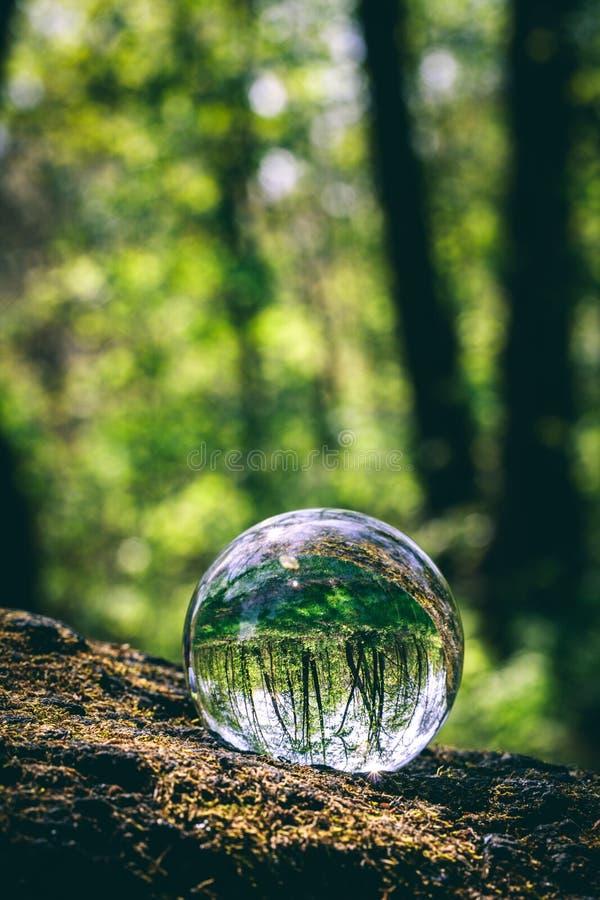 Esfera de cristal con la reflexión del bosque fotos de archivo