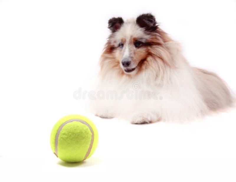Esfera do cão imagem de stock royalty free
