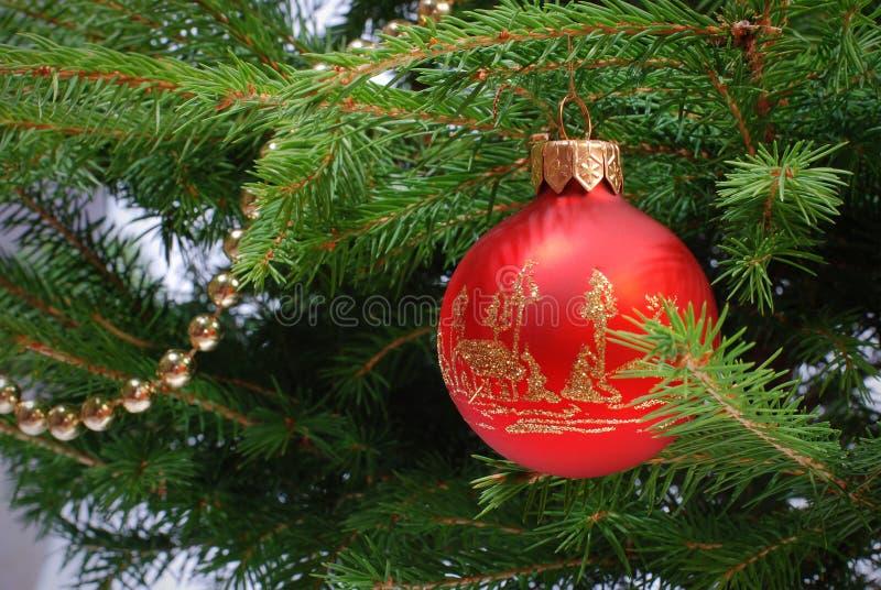 Esfera do Natal e grânulos dourados na árvore de abeto imagens de stock royalty free